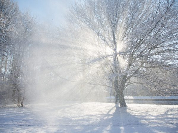 Sun shinning through trees on to snow